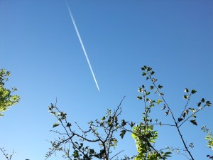 Airplane Overhead at Farm